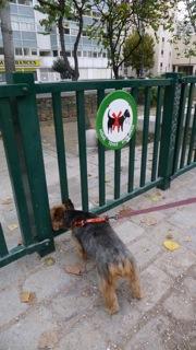 site de rencontre pour promener son chien