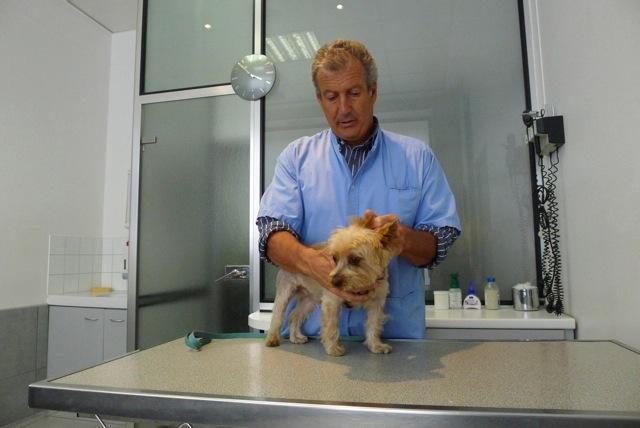 Mon chien, ma ville » Le chien et sa santé