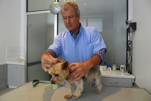 Serge Belais, vétérinaire