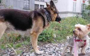 rencontre deux chiens males