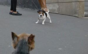 Rencontre mon chien