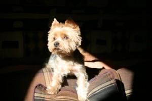 Mon chien ma ville le chien et la loi - Loi sur nuisances sonore par aboiement de chiens ...