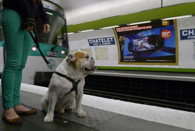 Chien dans le métro