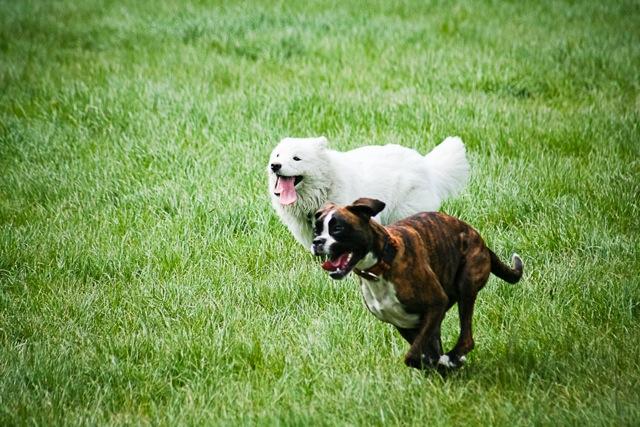 Promenades de chiens par des professionnelle à Vincenne