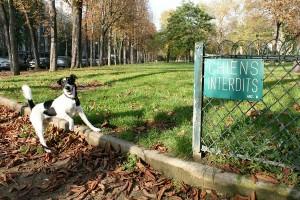 Mercure au Parc