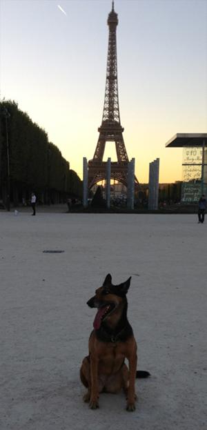 Iena---Tour-Eiffel