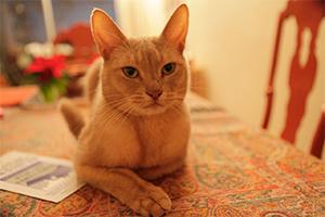 Le chat de Christiane Collange