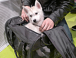 chien sac_opt.png