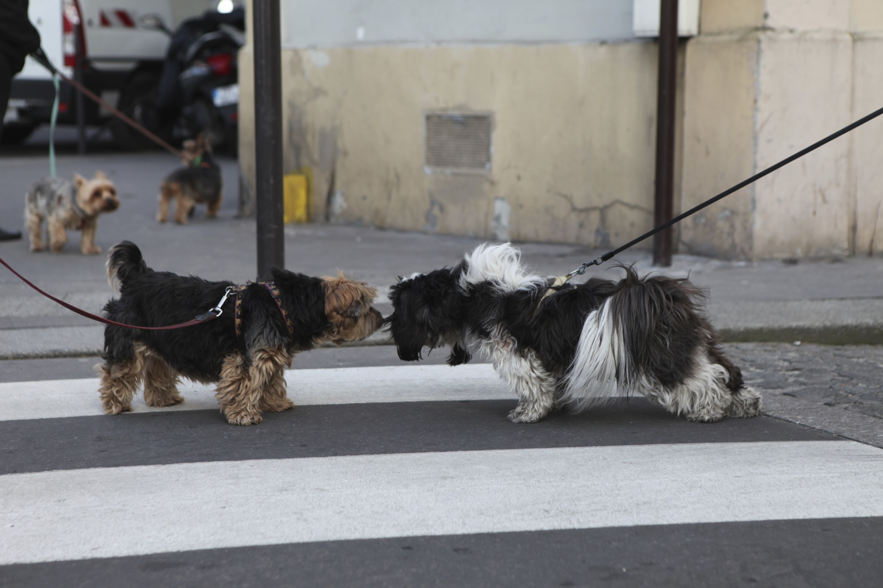 Casting de chiens - Kimberley Jonhnson - Bois de Boulogne - 3 Mars2013
