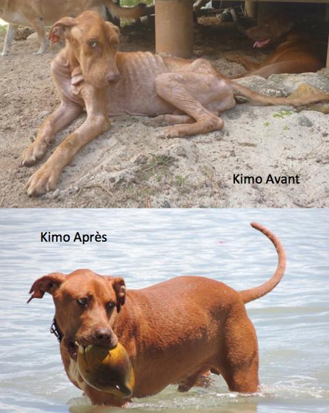 Kimo Avant Après